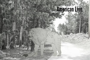 COTW#208: The American Lion by Trendorman