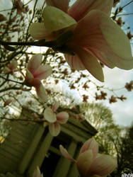spring in the cemetery by CiRcUsSpiDeR