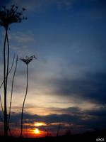 dark sunset by CiRcUsSpiDeR