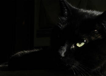 Backyard Panther by jonnyshot