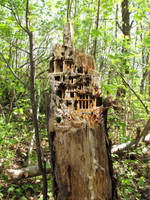 Inside life tree by b7000