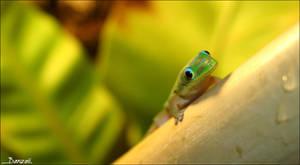 Smilling Gecko by BanzZaii