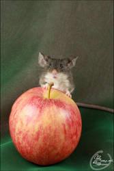 DFM Joe - Show Mouse by BanzZaii