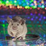 Van Raaij's Skyrim III - Show Mouse by BanzZaii