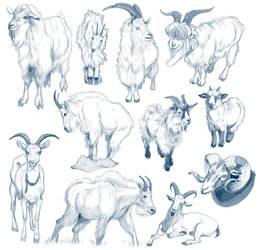 Goat Studies by cachava