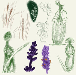 Plant Sketches by Flame-Shadow
