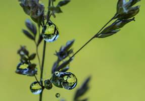 Apres la pluie by dashakern