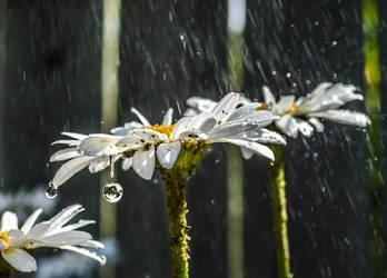 Summer Rain by dashakern