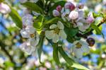Let spring last forever by dashakern