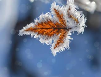 Winter Pattern by dashakern