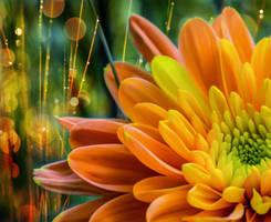 Orange Summer by dashakern