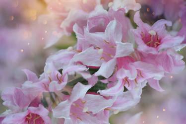 Pink Spring by dashakern