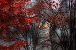 Red Autumn by dashakern