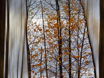 Autumn mood (2) by dashakern