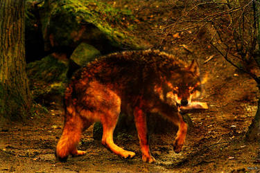 Hiroku: The Wolf of Legends by Hotsuma-Hiroku