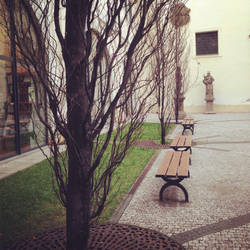 Trees and benches by Cielo-Di-Stella