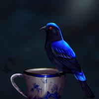 Asian fairy bluebird by Great-Skua