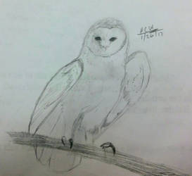 Barn Owl Sketch by DrCrazyWolf