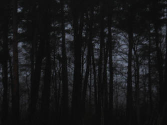 Black Horror Forest by Sundeal