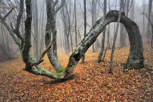 Autumn forest by ohlopkov