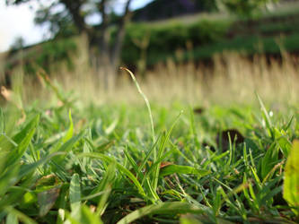 More Grass- 'nuff said by xx-LovelyRose-xx