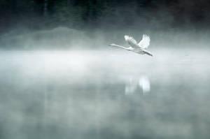 Through The Mist by MikkoLagerstedt