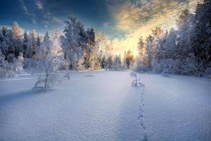 Winter by MikkoLagerstedt