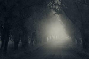 Path II by MikkoLagerstedt