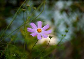 Dream Blossom by Loffy0