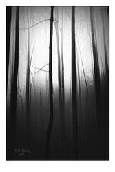 ForestArt by ChiFeng-dA
