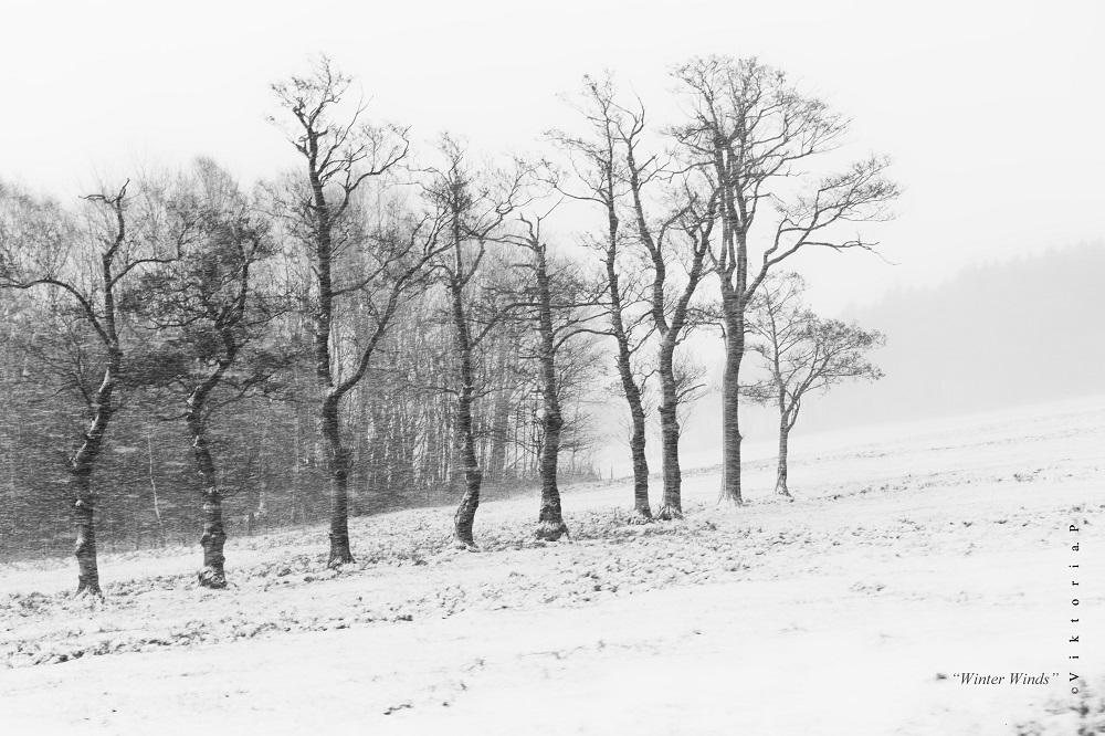 Winter Winds by ChiFeng-dA