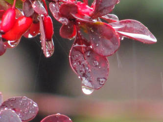 Red Leaves In Rain by MuffyMorrigan