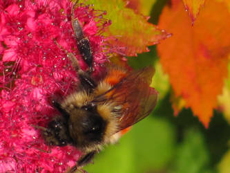 Autumn Colors: Bee by MuffyMorrigan