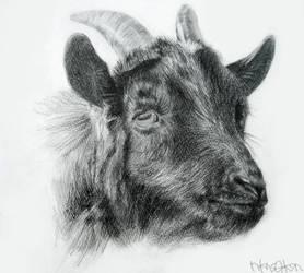 drawing01 by nkns0ksn