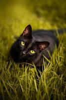 Black beauty by BelkaHazler