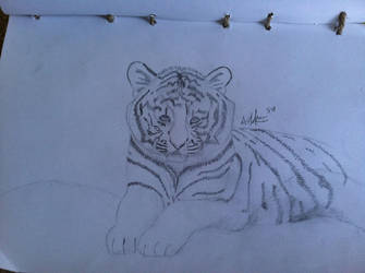 Tiger drawing for my friends by artmusic981