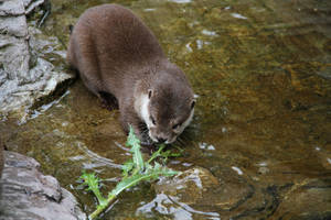 Otter cub by blackiris92