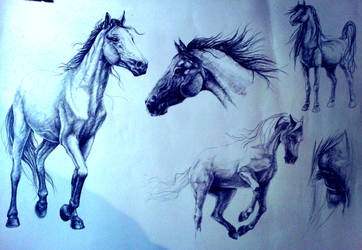 Horse study 2 by AllyEdFrown