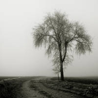 Misty Morning by TaNgeriNegreeN1986