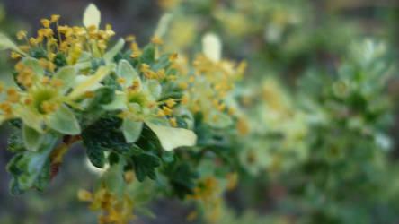 Flowerz by Maebry