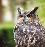 Owl by pricemc