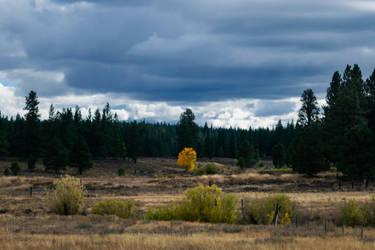Fall Among the Evergreens by Hfar