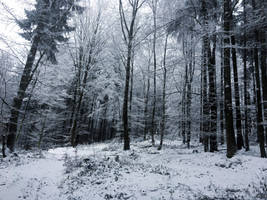 Winterscape III by midvinterdraken