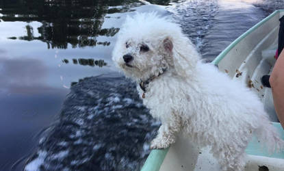 Sani on the boat by midvinterdraken