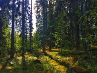 Walking through the forest by midvinterdraken