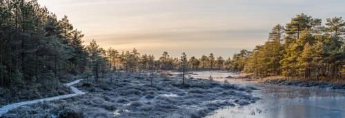 Frozen Bog Pano by sulevlange