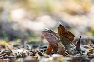 Frog by sulevlange