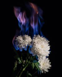 Burning Flowers, November 01, 2018 by sulevlange