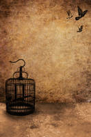 Birdcage Template 5 by sd-stock