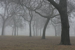 Foggy Forest 38 by sd-stock